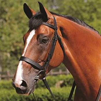 JHL Jumpers Horse Line Plain Cavesson Bridle